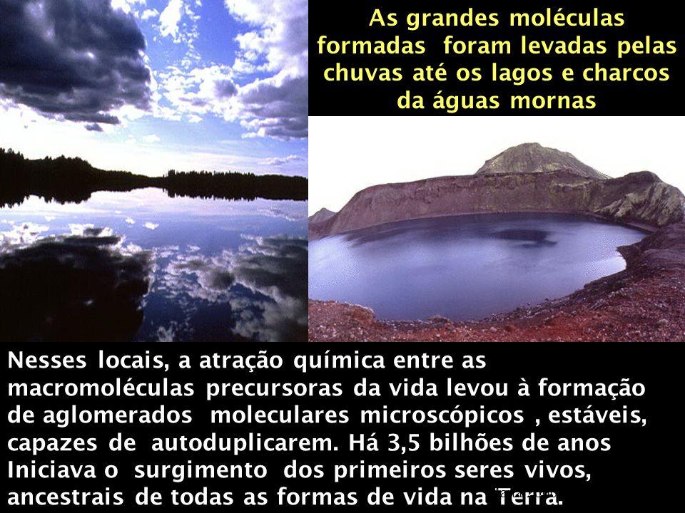 As grandes moléculas formadas foram levadas pelas chuvas até os lagos e charcos da águas mornas Nesses locais, a atração química entre as macromolécul