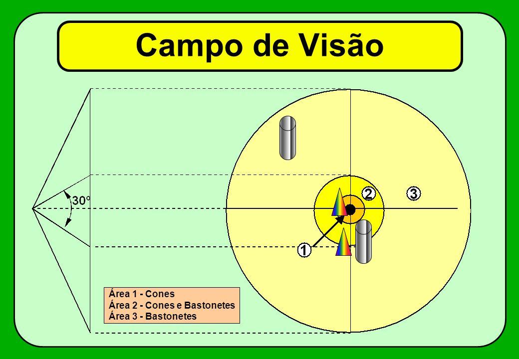 Campo de Visão Área 1 - Cones Área 2 - Cones e Bastonetes Área 3 - Bastonetes