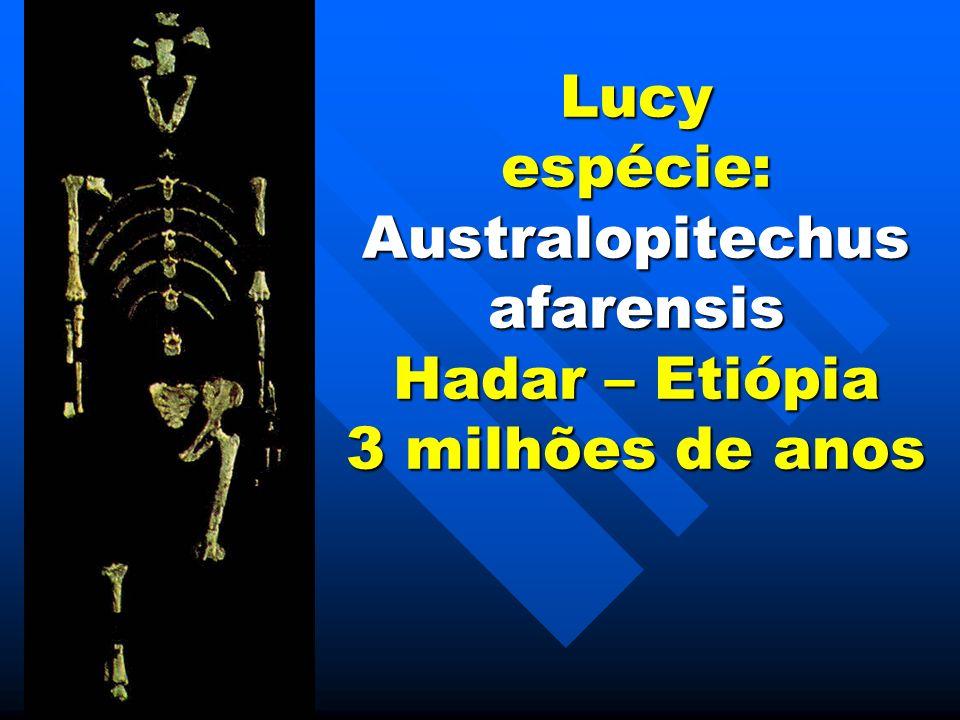Lucy espécie: Australopitechus afarensis Hadar – Etiópia 3 milhões de anos