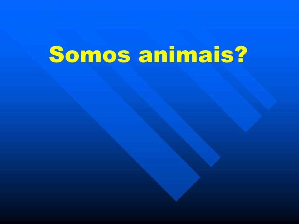 Somos animais?