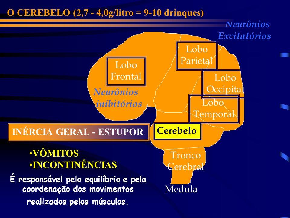 Lobo Frontal Cerebelo Lobo Parietal Lobo Occipital Lobo Temporal Neurônios inibitórios Neurônios Excitatórios O LOBO TEMPORAL (1,8 - 3,0g/litro = 7-10 drinques) Tronco Cerebral CONFUSÃO MENTAL Medula É relacionado primariamente com o sentido da audição.