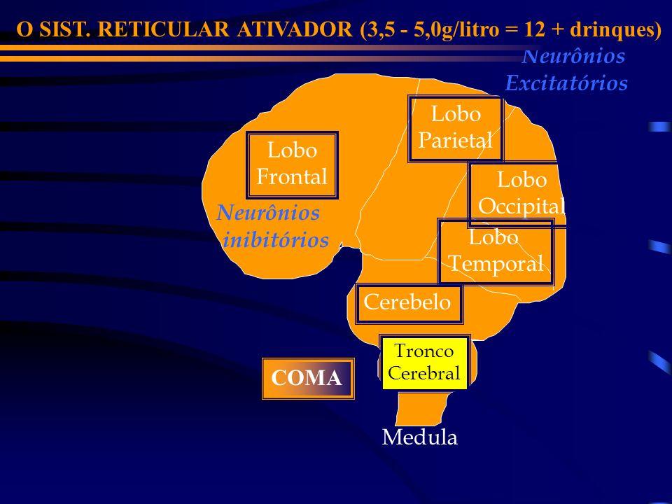 Lobo Frontal Cerebelo Lobo Parietal Lobo Occipital Medula Tronco Cerebral Lobo Temporal Neurônios inibitórios Neurônios Excitatórios O CEREBELO (2,7 - 4,0g/litro = 9-10 drinques) INÉRCIA GERAL - ESTUPOR VÔMITOS INCONTINÊNCIAS É responsável pelo equilíbrio e pela coordenação dos movimentos realizados pelos músculos.