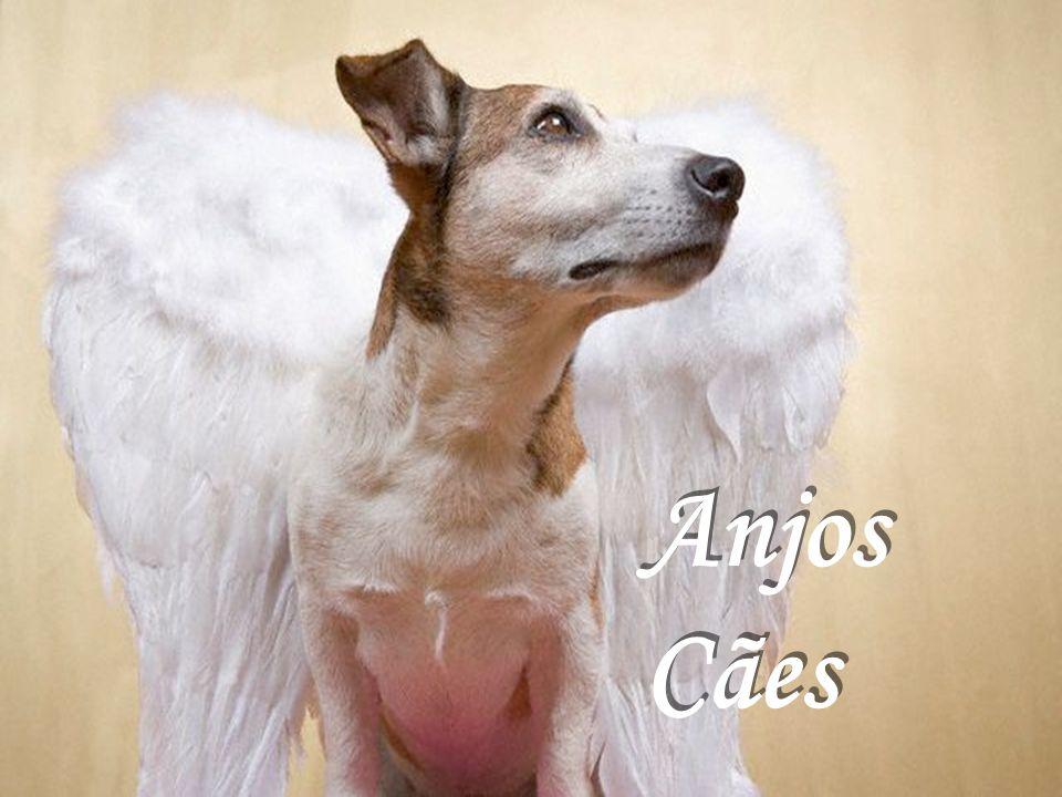 Apesar dessa aparência, são tão anjos quanto os outros (aqueles com asas).