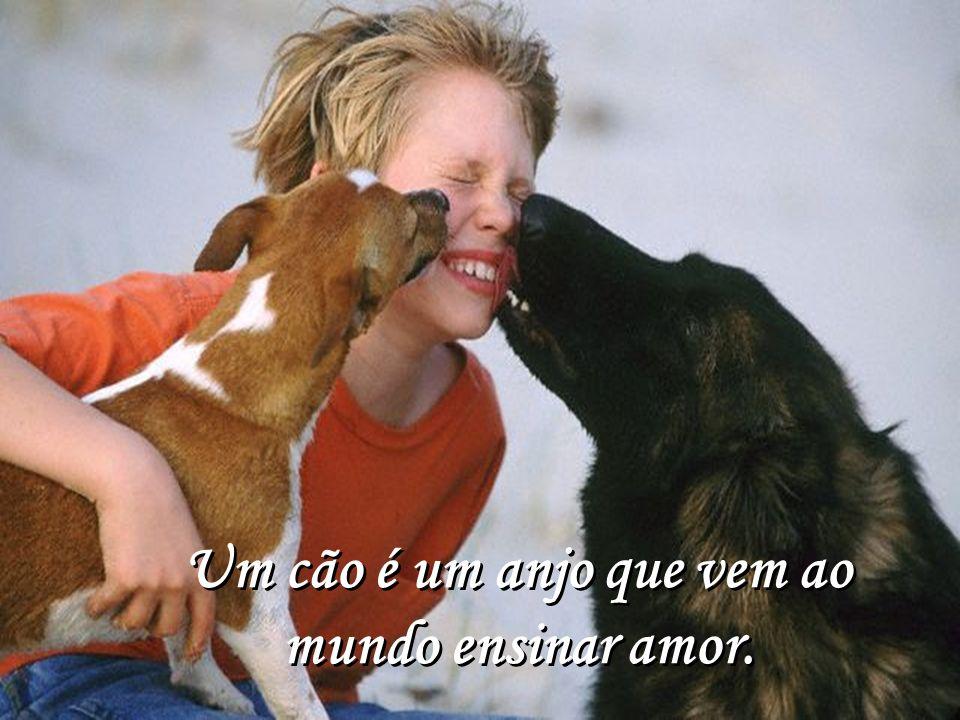 Um cão é um anjo que vem ao mundo ensinar amor. Um cão é um anjo que vem ao mundo ensinar amor.