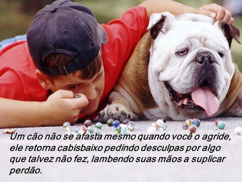 Um cão não se afasta mesmo quando você o agride, ele retorna cabisbaixo pedindo desculpas por algo que talvez não fez, lambendo suas mãos a suplicar perdão.