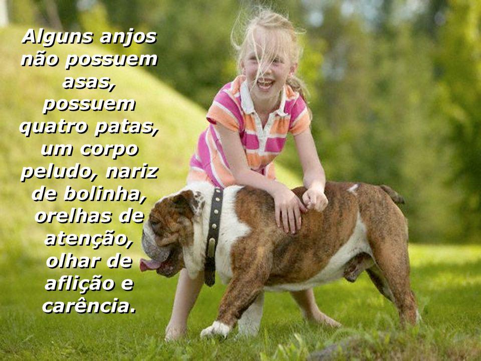 Um cão não se afasta mesmo quando você o agride, ele retorna cabisbaixo pedindo desculpas por algo que talvez não fez, lambendo suas mãos a suplicar p