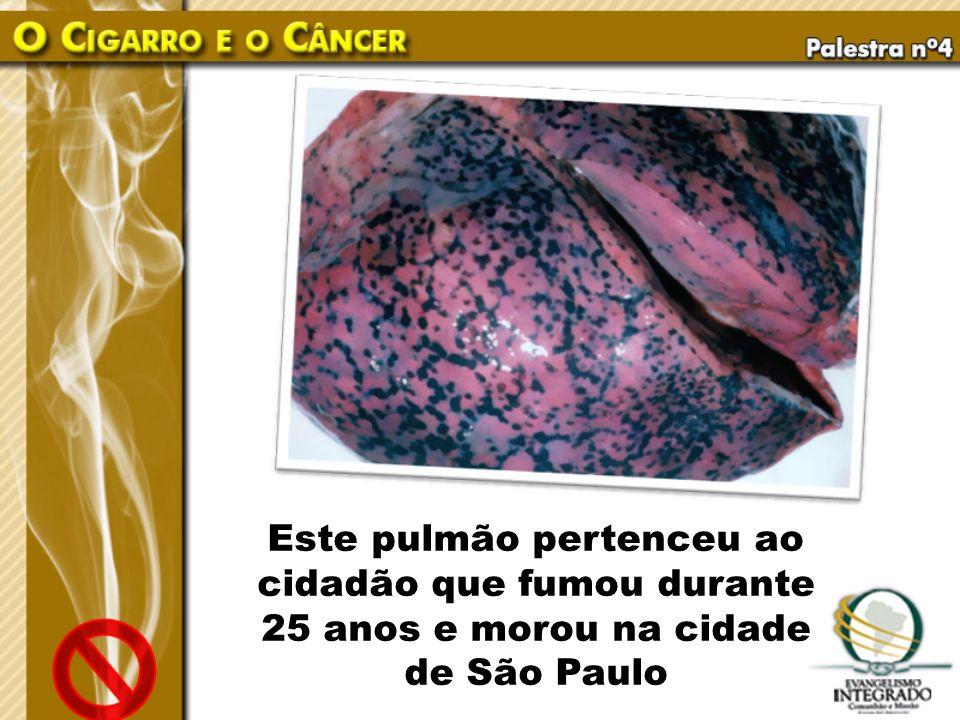 Este pulmão pertenceu ao cidadão que fumou durante 25 anos e morou na cidade de São Paulo