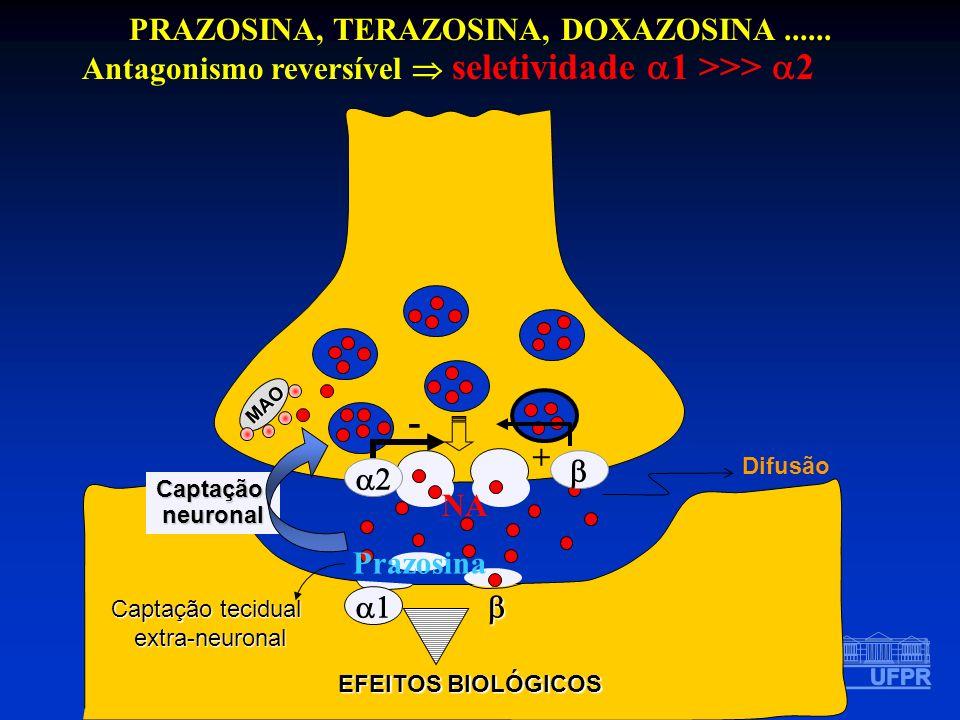 PRAZOSINA, TERAZOSINA, DOXAZOSINA...... Antagonismo reversível seletividade 1 >>> 2 MAO EFEITOS BIOLÓGICOS Prazosina Difusão Captaçãoneuronal Captação