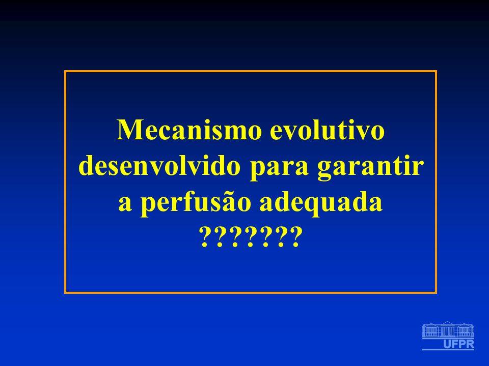 Mecanismo evolutivo desenvolvido para garantir a perfusão adequada ???????