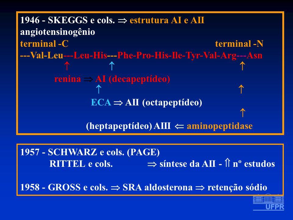 1946 - SKEGGS e cols. estrutura AI e AII angiotensinogênio terminal -C terminal -N ---Val-Leu---Leu-His---Phe-Pro-His-Ile-Tyr-Val-Arg---Asn renina AI