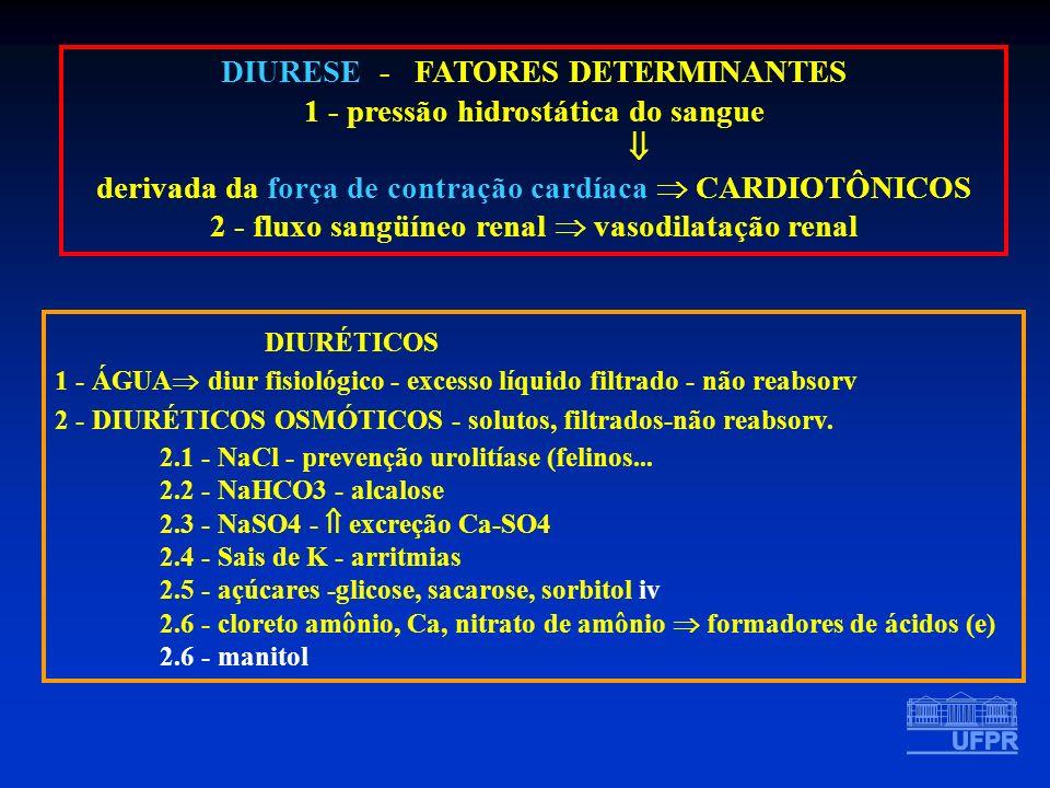 DIURESE - FATORES DETERMINANTES 1 - pressão hidrostática do sangue derivada da força de contração cardíaca CARDIOTÔNICOS 2 - fluxo sangüíneo renal vas