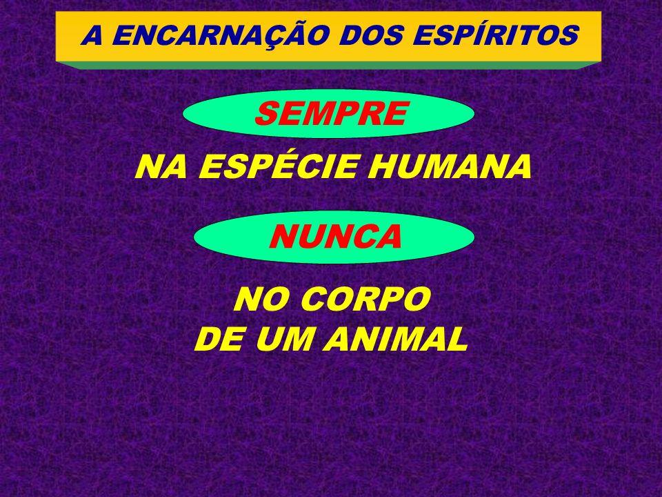 SEMPRE NA ESPÉCIE HUMANA NUNCA NO CORPO DE UM ANIMAL A ENCARNAÇÃO DOS ESPÍRITOS
