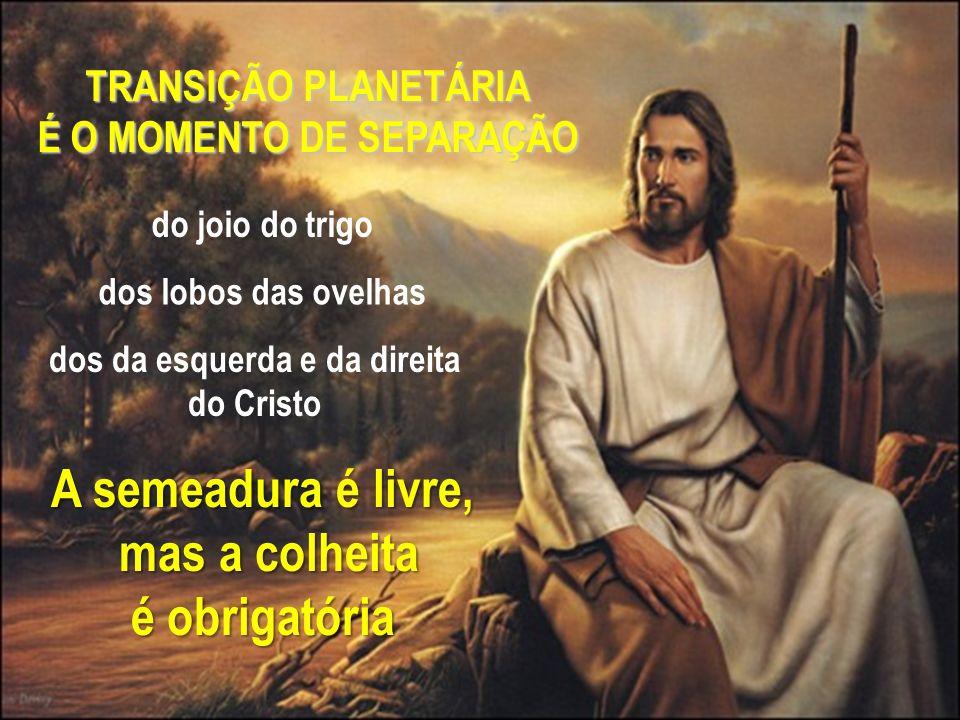 TRANSIÇÃO PLANETÁRIA É O MOMENTO DE SEPARAÇÃO do joio do trigo dos lobos das ovelhas dos da esquerda e da direita do Cristo A semeadura é livre, mas a