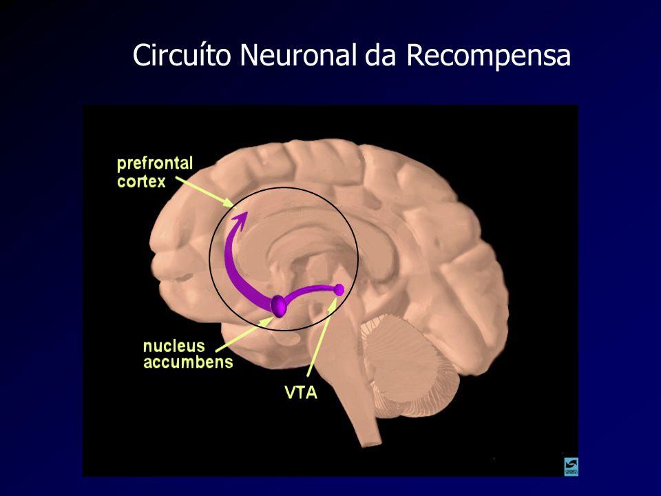 Circuíto Neuronal da Recompensa