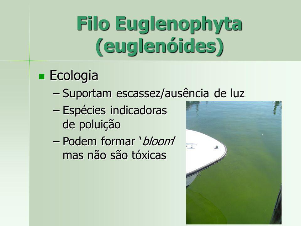Ecologia Ecologia –Suportam escassez/ausência de luz –Espécies indicadoras de poluição –Podem formar bloom mas não são tóxicas Filo Euglenophyta (eugl