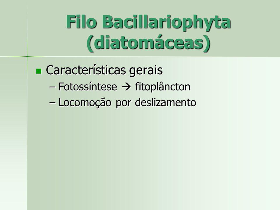 Características gerais Características gerais –Fotossíntese fitoplâncton –Locomoção por deslizamento Filo Bacillariophyta (diatomáceas)