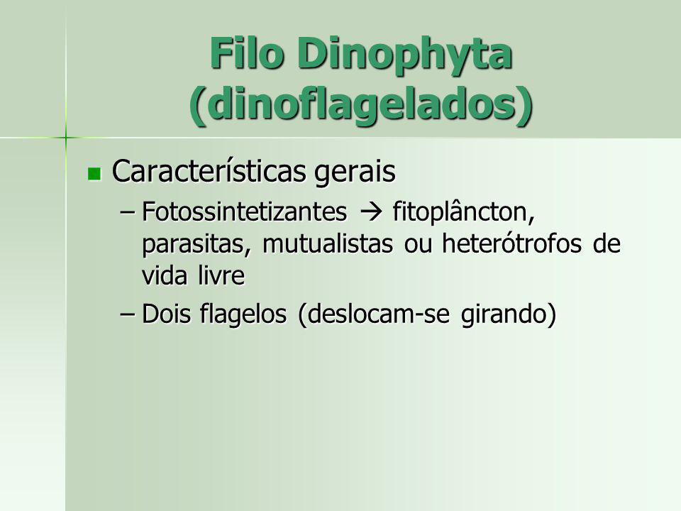 Características gerais Características gerais –Fotossintetizantes fitoplâncton, parasitas, mutualistas ou heterótrofos de vida livre –Dois flagelos (d