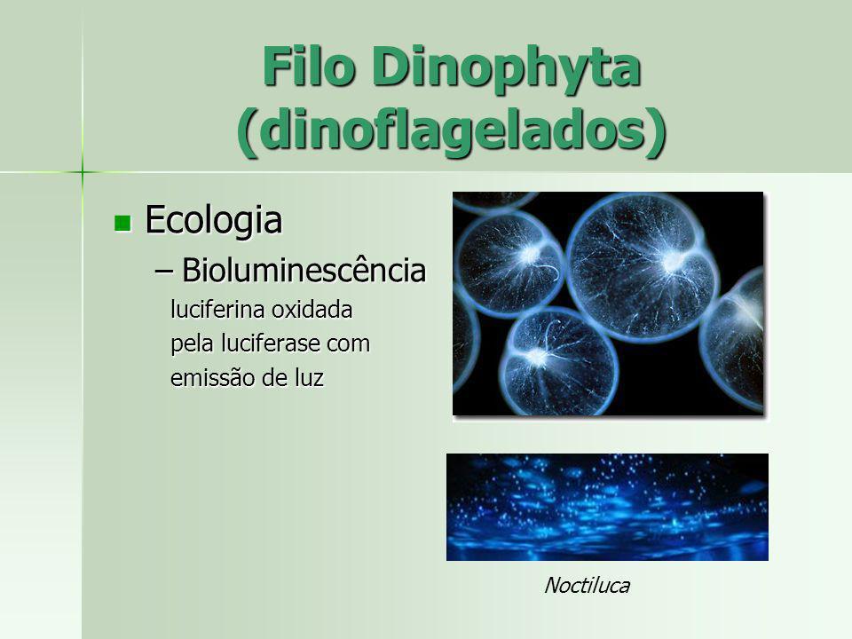 Ecologia Ecologia –Bioluminescência luciferina oxidada luciferina oxidada pela luciferase com pela luciferase com emissão de luz emissão de luz Filo D