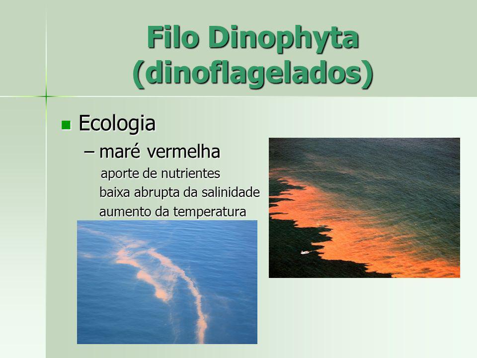 Ecologia Ecologia –maré vermelha aporte de nutrientes aporte de nutrientes baixa abrupta da salinidade aumento da temperatura Filo Dinophyta (dinoflag
