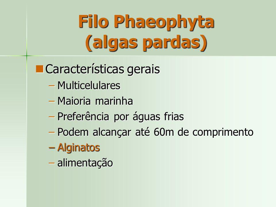 Filo Phaeophyta (algas pardas) Características gerais Características gerais –Multicelulares –Maioria marinha –Preferência por águas frias –Podem alca
