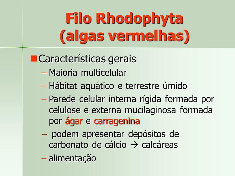 Filo Rhodophyta (algas vermelhas) Características gerais Características gerais –Maioria multicelular –Hábitat aquático e terrestre úmido –Parede celu