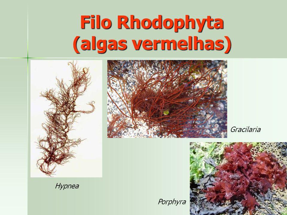Hypnea Gracilaria Porphyra Filo Rhodophyta (algas vermelhas)