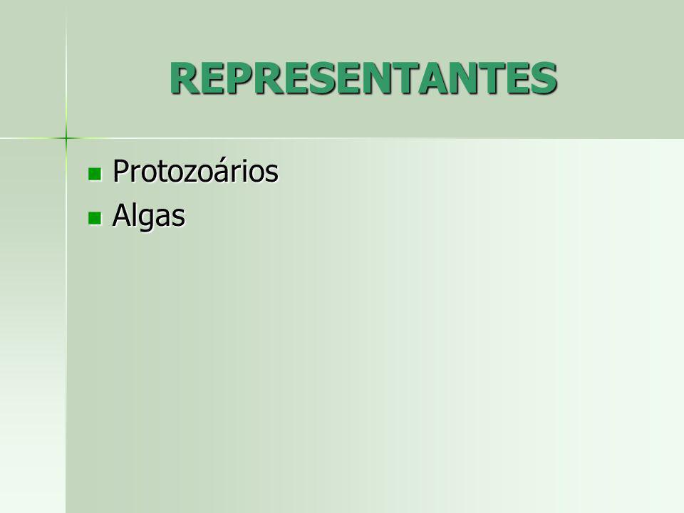 REPRESENTANTES Protozoários Protozoários Algas Algas