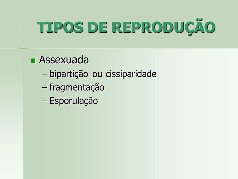 TIPOS DE REPRODUÇÃO Assexuada Assexuada –bipartição ou cissiparidade –fragmentação –Esporulação