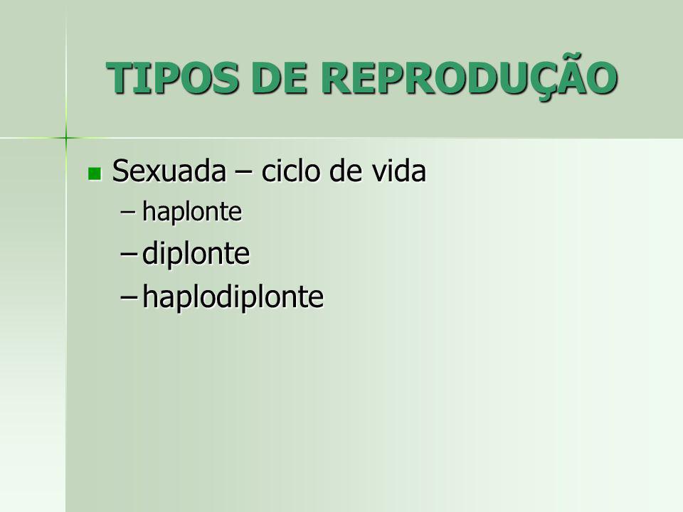 TIPOS DE REPRODUÇÃO Sexuada – ciclo de vida Sexuada – ciclo de vida –haplonte –diplonte –haplodiplonte
