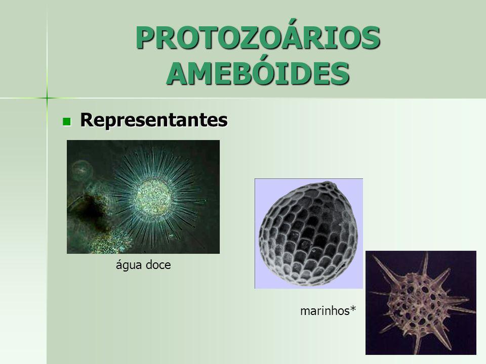 PROTOZOÁRIOS AMEBÓIDES Representantes Representantes água doce marinhos*