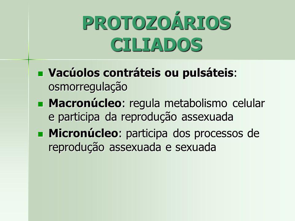 Vacúolos contráteis ou pulsáteis: osmorregulação Vacúolos contráteis ou pulsáteis: osmorregulação Macronúcleo: regula metabolismo celular e participa