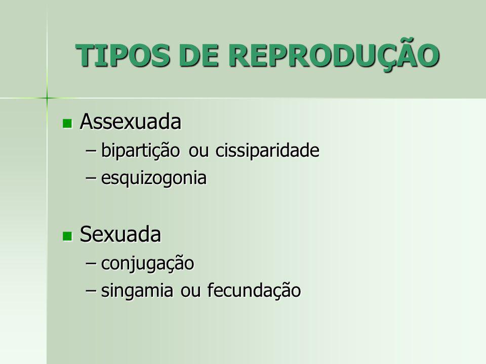 TIPOS DE REPRODUÇÃO Assexuada Assexuada –bipartição ou cissiparidade –esquizogonia Sexuada Sexuada –conjugação –singamia ou fecundação