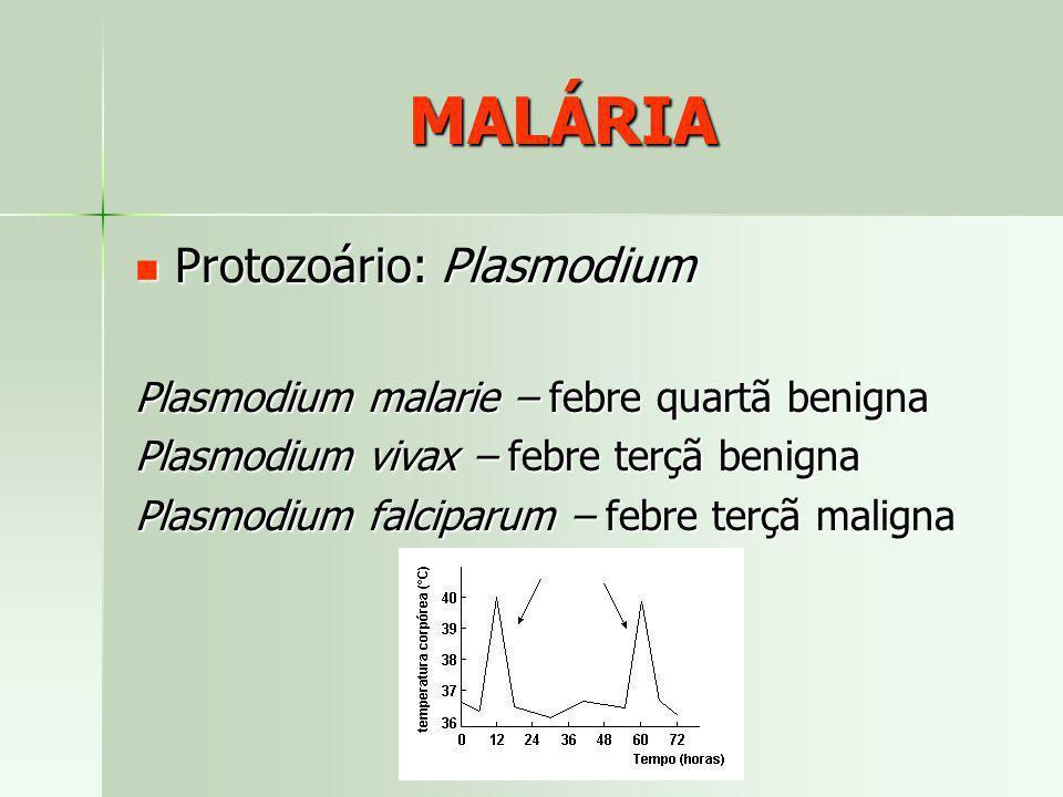 MALÁRIA Plasmodium malarie – febre quartã benigna Plasmodium vivax – febre terçã benigna Plasmodium falciparum – febre terçã maligna