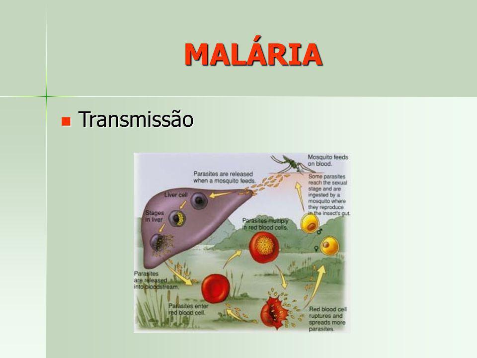 MALÁRIA Transmissão Transmissão