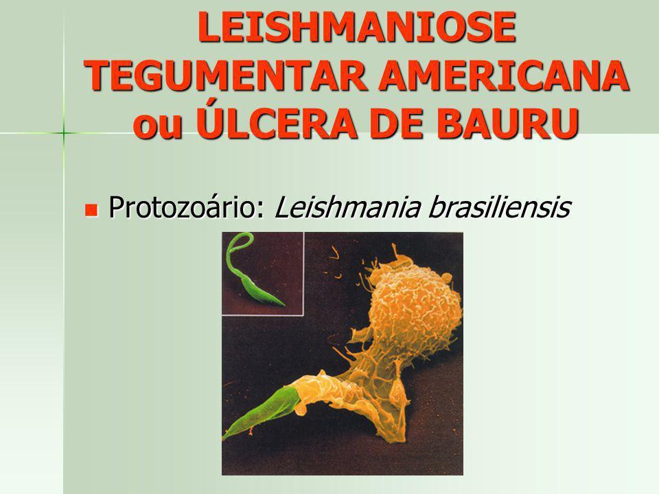 LEISHMANIOSE TEGUMENTAR AMERICANA ou ÚLCERA DE BAURU Protozoário: Leishmania brasiliensis Protozoário: Leishmania brasiliensis