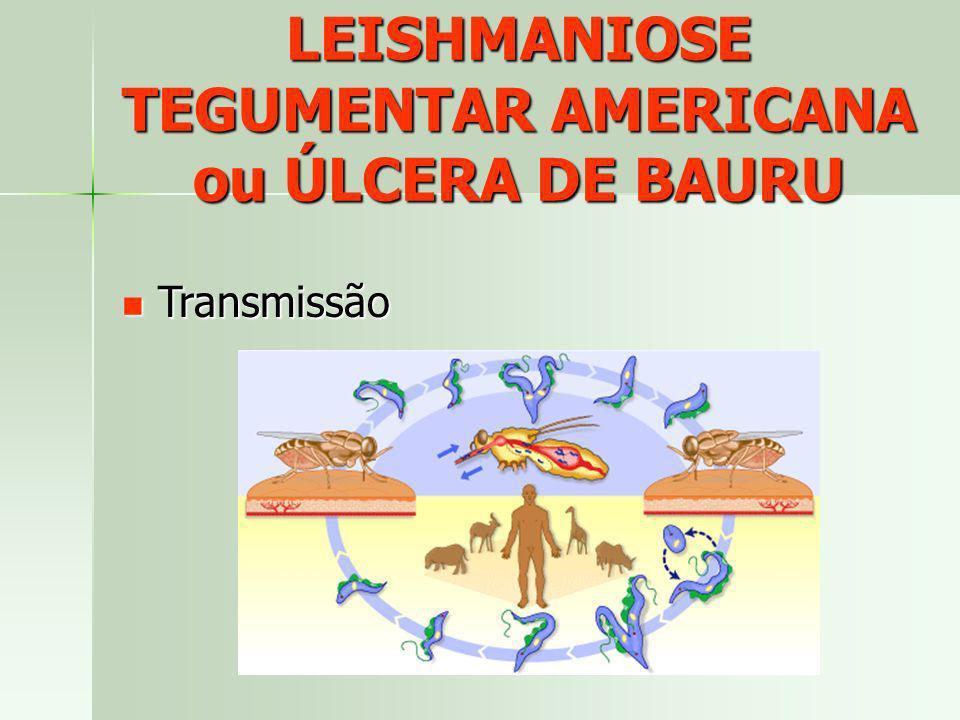 LEISHMANIOSE TEGUMENTAR AMERICANA ou ÚLCERA DE BAURU Transmissão Transmissão