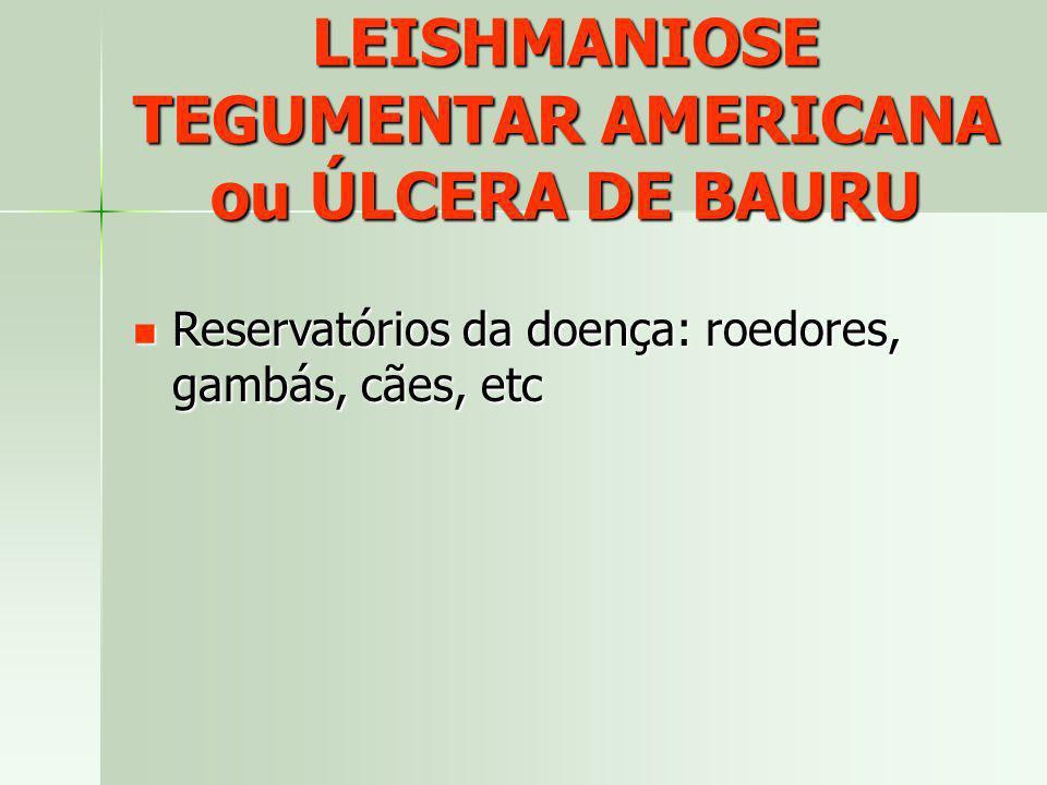 LEISHMANIOSE TEGUMENTAR AMERICANA ou ÚLCERA DE BAURU Reservatórios da doença: roedores, gambás, cães, etc Reservatórios da doença: roedores, gambás, c