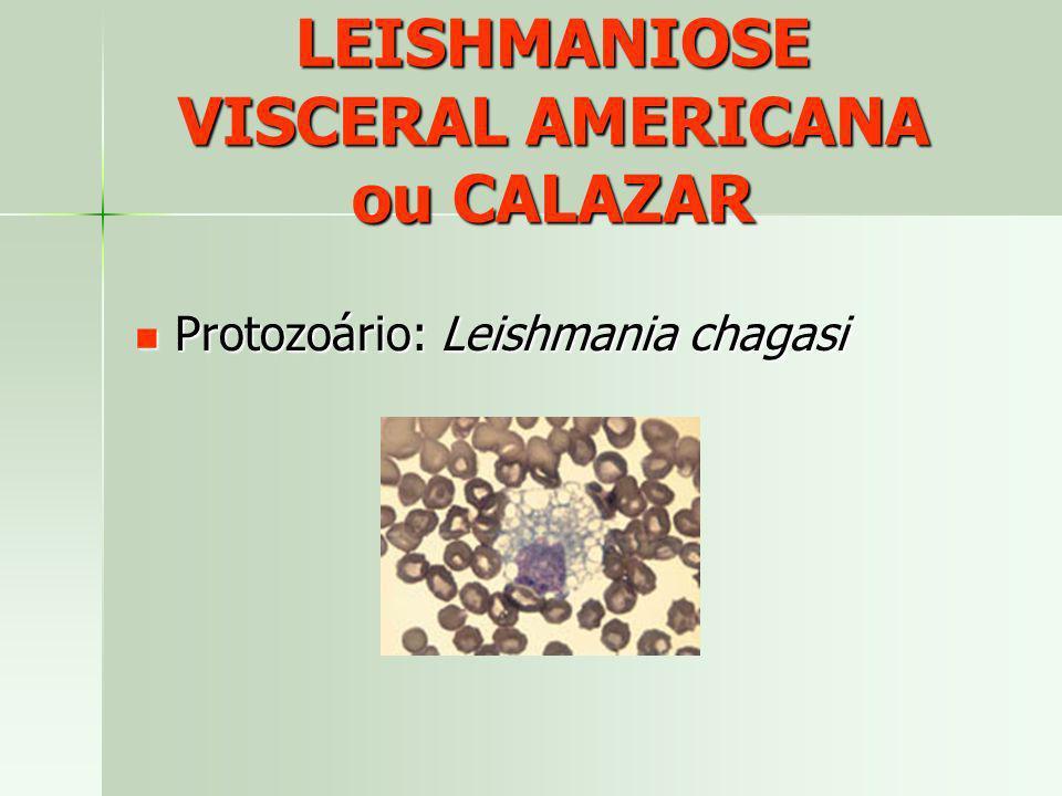 LEISHMANIOSE VISCERAL AMERICANA ou CALAZAR Protozoário: Leishmania chagasi Protozoário: Leishmania chagasi