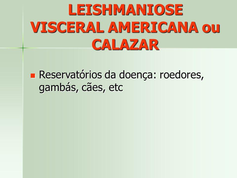 LEISHMANIOSE VISCERAL AMERICANA ou CALAZAR Reservatórios da doença: roedores, gambás, cães, etc Reservatórios da doença: roedores, gambás, cães, etc