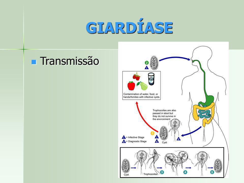 Transmissão Transmissão GIARDÍASE