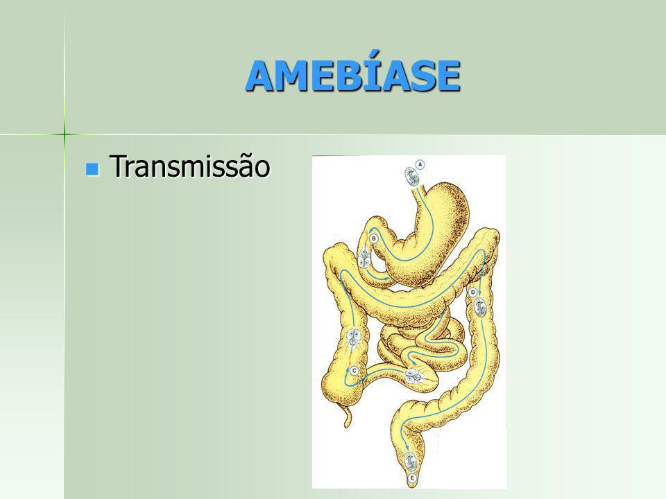 AMEBÍASE Transmissão Transmissão