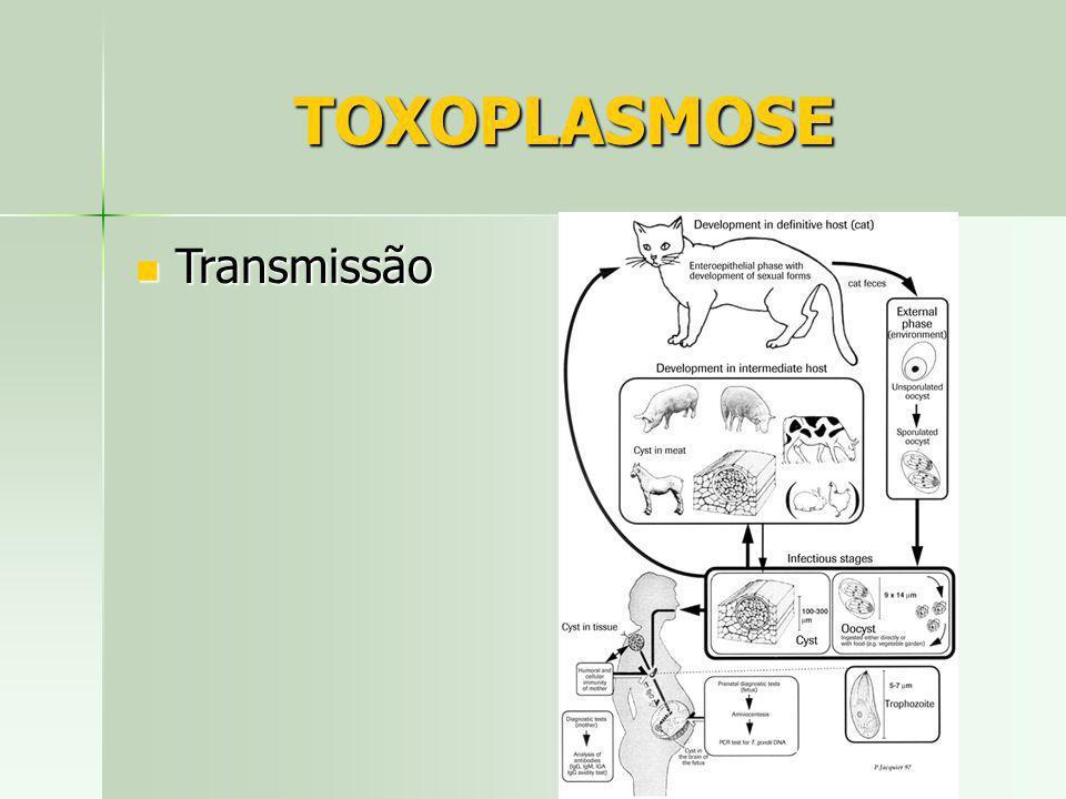 TOXOPLASMOSE Transmissão Transmissão