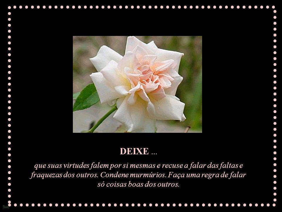 Sue DEIXE...