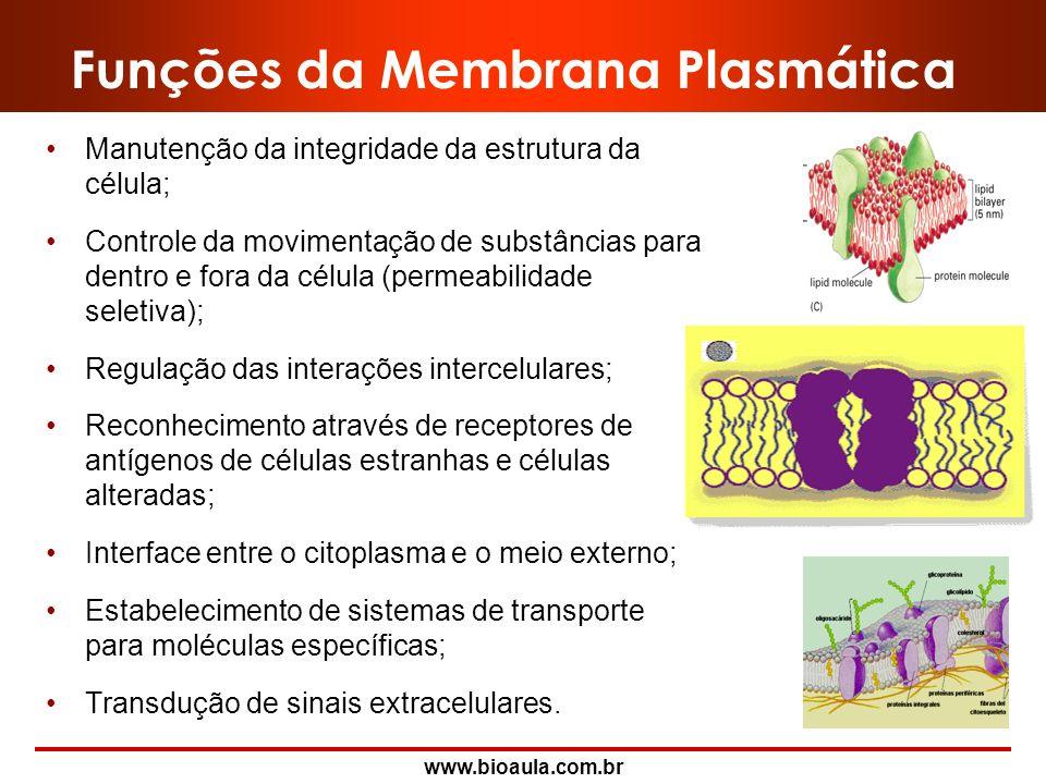 www.bioaula.com.br Proteínas da Membrana Plasmática Algumas proteínas integrais atravessam inteiramente a bicamada lipídica, fazendo saliência em amba