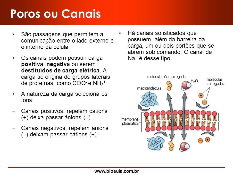 www.bioaula.com.br Propriedades da Membrana Plasmática Boa elasticidadeDevido a presença de proteínas específicas que oferecem esta capacidade. Boa ca