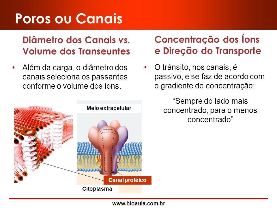 www.bioaula.com.br Poros ou Canais São passagens que permitem a comunicação entre o lado externo e o interno da célula. Os canais podem possuir carga