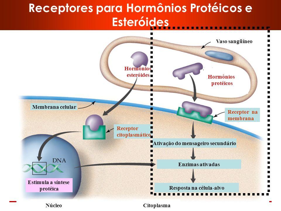 www.bioaula.com.br Receptores São sítios que possuem estrutura adequada à ligação de certas moléculas que, ao se ligarem deslancham uma série de proce