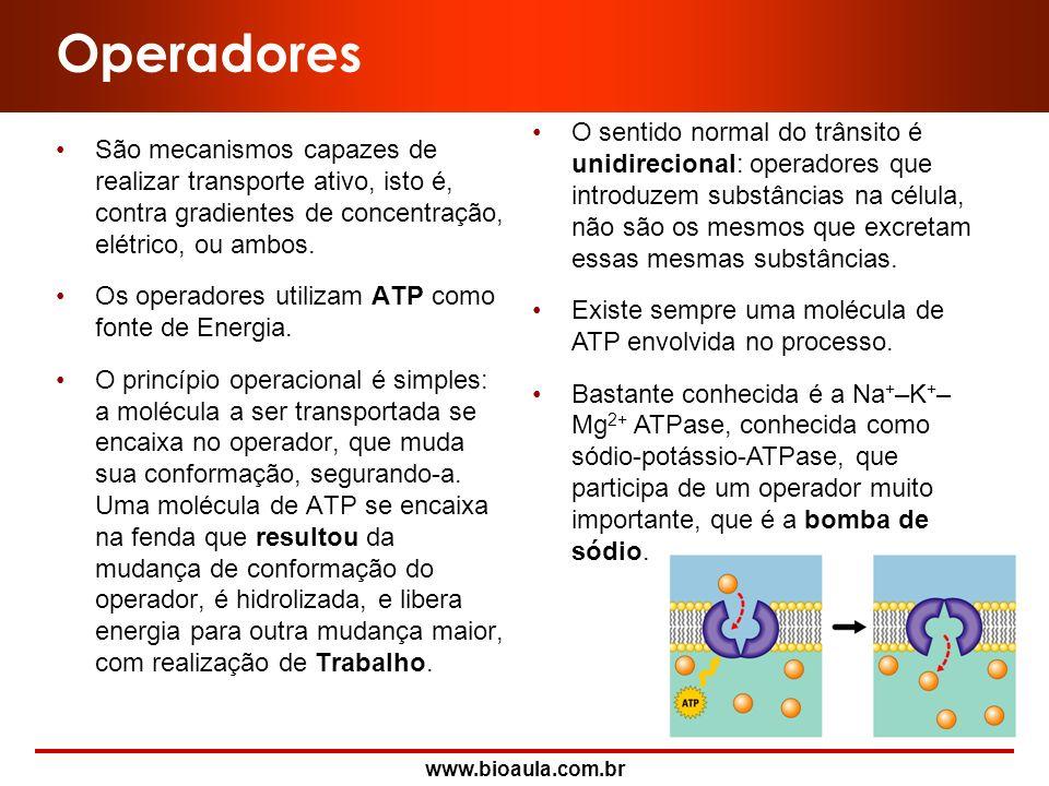 www.bioaula.com.br Receptores para Hormônios Protéicos e Esteróides Hormônios esteróides NúcleoCitoplasma Receptor na membrana Vaso sangüíneo Hormônio