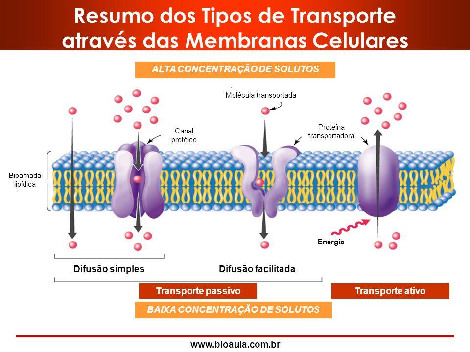 www.bioaula.com.br II- Direção do Transporte Ativo UNIPORTE = transportadores que carregam um único soluto em uma única direção. Proteína ligante de C