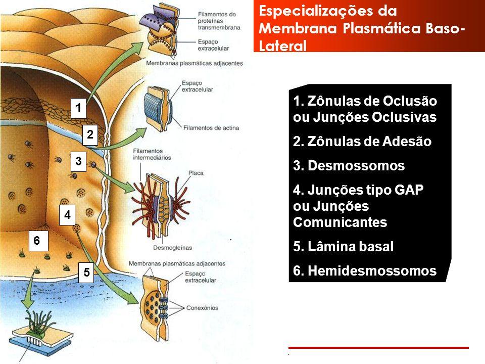 www.bioaula.com.br Exocitose Meio extracelular Membrana Plasmática Citoplasma